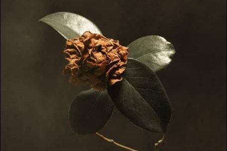 St. Paul & The Broken Bones – Young Sick Camellia